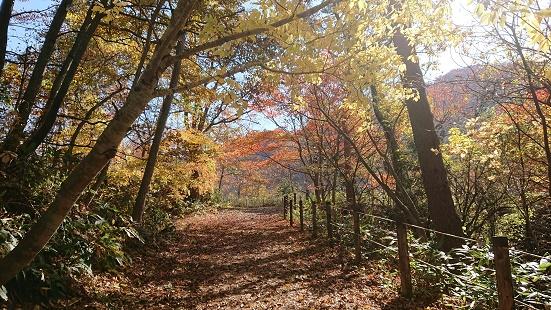 中山平遊歩道の紅葉