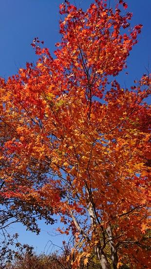 見晴し台の紅葉