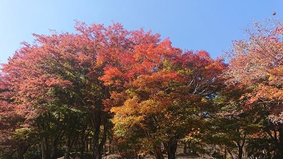 レストハウスの手前の紅葉
